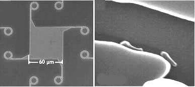 Bacteria Motor